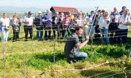 Arndt Köbelin erklärt den Villingern seine ökologische Arbeit im Weinberg