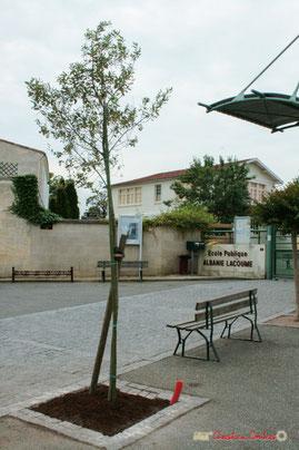 Arbre de la Laïcité, place Camille Gourdon, Créon