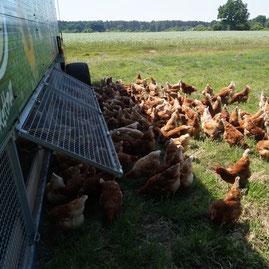 Mobiler Hühnerstall: Auslaufklappen