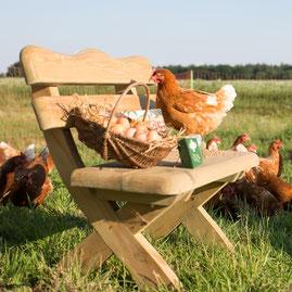 Frische Eier: regional und direkt vom Erzeuger