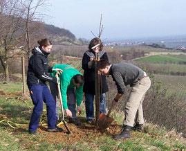 Baumpflanzung (Foto: W. Kern)