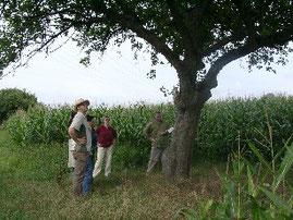 Obstbaumbestimmung (Foto: J. Zürker)
