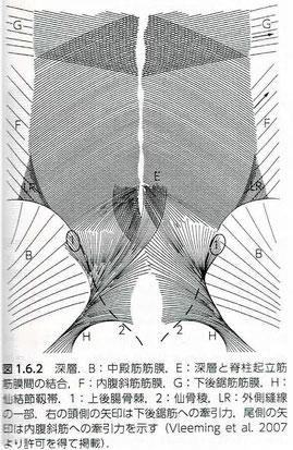 胸腰筋膜後葉の深層