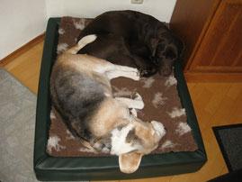 Toni und Luzi liegen geminesam in einem Körbchen