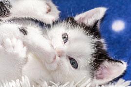 Katzensitting, Katzensitter in Gießen, Tierbetreuung