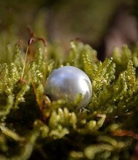 Perle im Moos