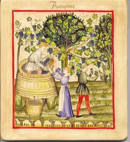 cueillette des grappes et foulage du raisin aux pieds .