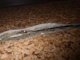 床材:クッションフロアの裏紙にアスベスト含有