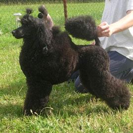 Click picture for pedigree