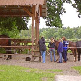 Oertzewinkel Camping für Reiter, Wanderreiter - Camping mit Pferd