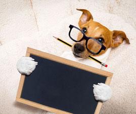 Chien étudiant. C'est un jack russel avec des lunettes, un crayon dans la gueule et qui porte une ardoise.