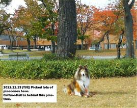 2012.11.13(火)
