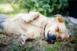 Entspannung/ entspannter Hund
