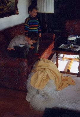"""""""Hunde verstecken"""": 1 oder 2 Pyris unter der Decke?"""