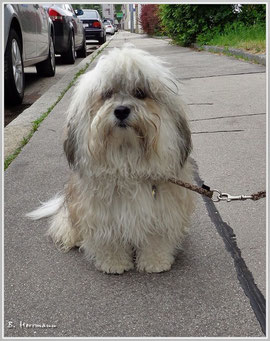 Finjo, Suris neuer Hundekumpel
