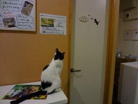 ドアの猫シールが1週間ぐらい気になって仕方なかった さち。