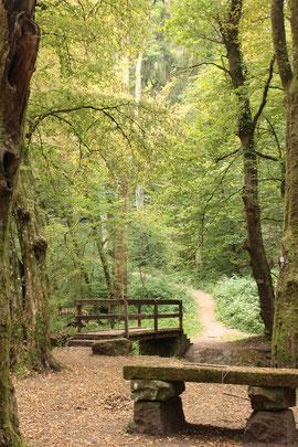 Überquerung des Feldrennacher Baches und weiter geht es in Richtung Weiler durch den Wald (G. Franke)