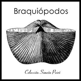 Braquiópodos - Simeón Peiró