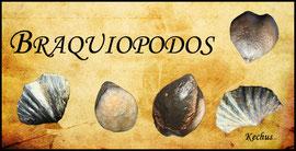 Braquiópodos - Kechus