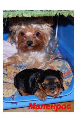 2009г.Варя с щенком