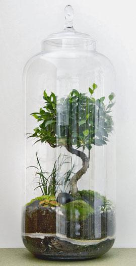 Das GiantLab ein faszinierendes Mikro-Ökosystem im Glas bei www.the-golden-rabbit.de