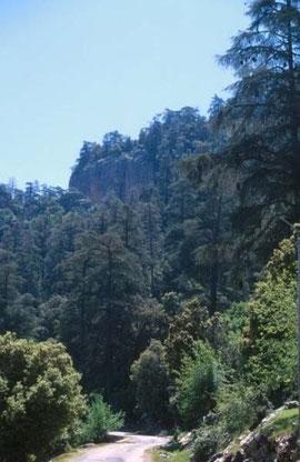 Biotope forestier près du Lac Azigza, Moyen Atlas