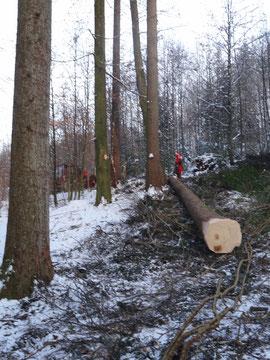 Holzerarbeiten im Winter