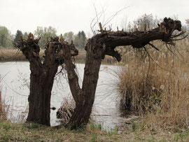 natürliche Kunst in Daxlanden
