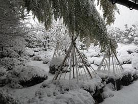 和田屋さん庭の雪つり