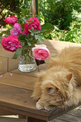 また~? バラと私・・・もうよろしいんですけど・・・6月3日