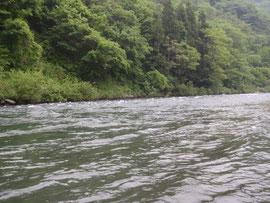 あの川の、あの瀬でサクラマスを釣るために