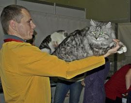 Marzipan Karmino Cat