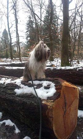 Milka und der hoffentlich letzte Schnee