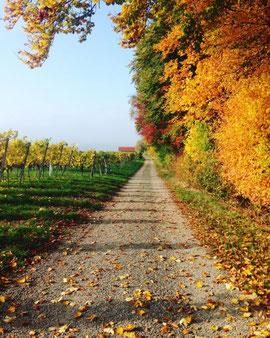 Herbstblues adé Tageslicht und frische Luft