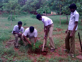 Students planting tree saplings