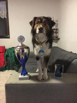 Tucker Creek's Special Ticket - Vereinsmeister 2017