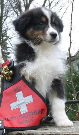 Ob ich auch mal ein Rettungshund werde???