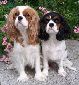 Babette mit ihrer Mama Wergenie