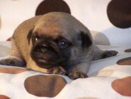 Alfons, 2 Wochen alt