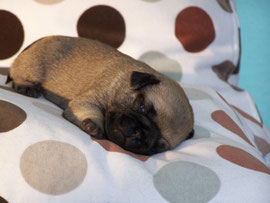 Ava-Penelope, 2 Wochen alt