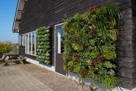 Jardín vertical exterior