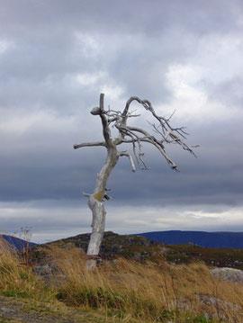 Der einzige richtige Baum auf der Insel