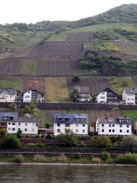 ぶどう畑を背にした瀟洒な家々