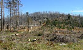 Ein Waldsterben schier apokalyptischen Ausmaßes: Borkenkäfer und Orkane haben den Wald in den Hochlagen schwer geschädigt.