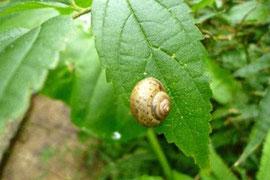 ※いつも綺麗なカタツムリの殻も親水性です