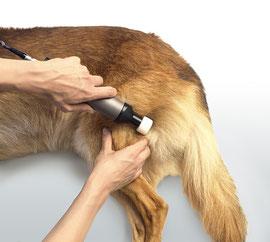 Oberschenkelbehandlung beim Hund