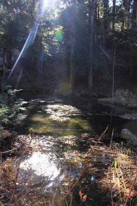 八王子神社の池
