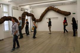 The Cosmic Anaconda @ SEM