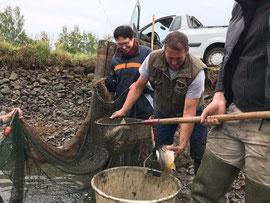 Familie Bächer beim Abfischen