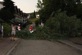 Baum auf Straße 14. Juni 2010